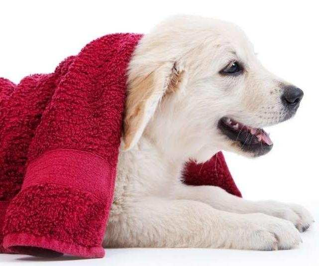 How to bathe your dog or cat yourself?