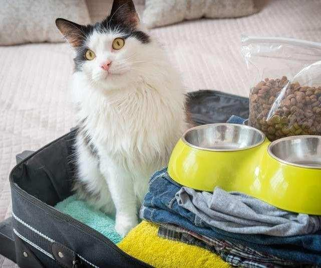 How to travel safely with a cat?